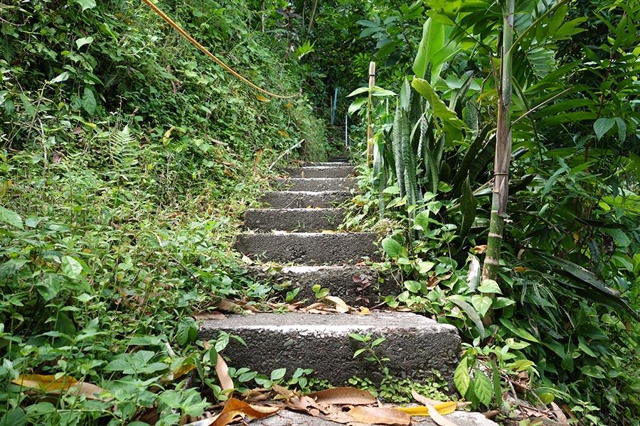 mango-ridge-port-antonio-jamaica-3_road-affair