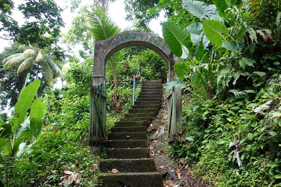 mango-ridge-port-antonio-jamaica-5_road-affair
