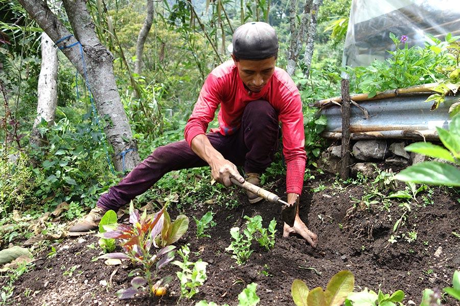 volunteering_atitlan_organics_guatemala-road_affair