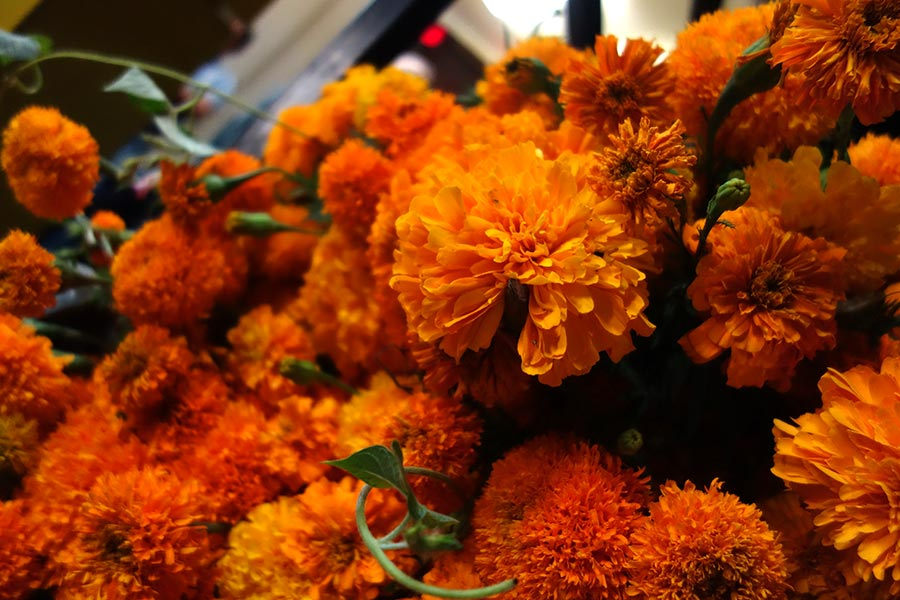 marigold flowers in oaxaca