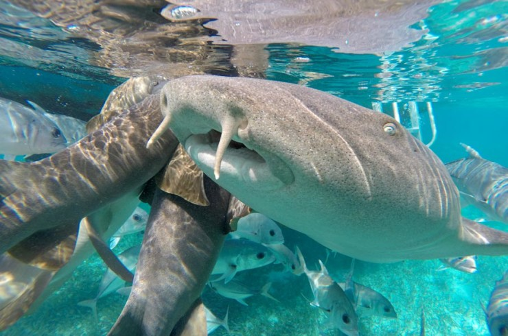 Snorkeling in the Hol Chan Reserve in Caye Caulker, Belize