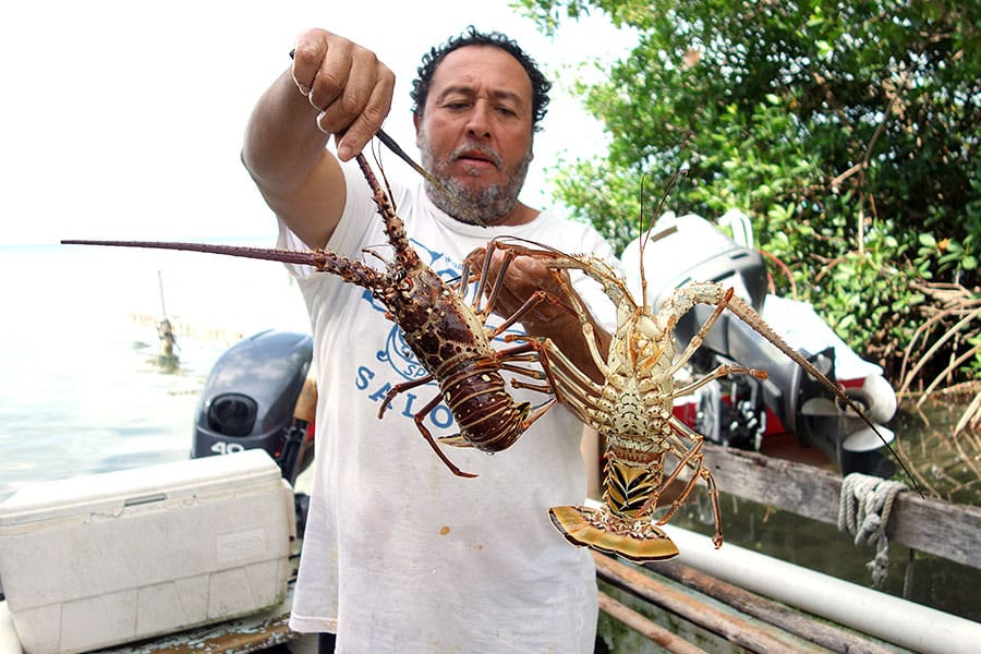 Local Fisherman selling Lobster in Caye Caulker