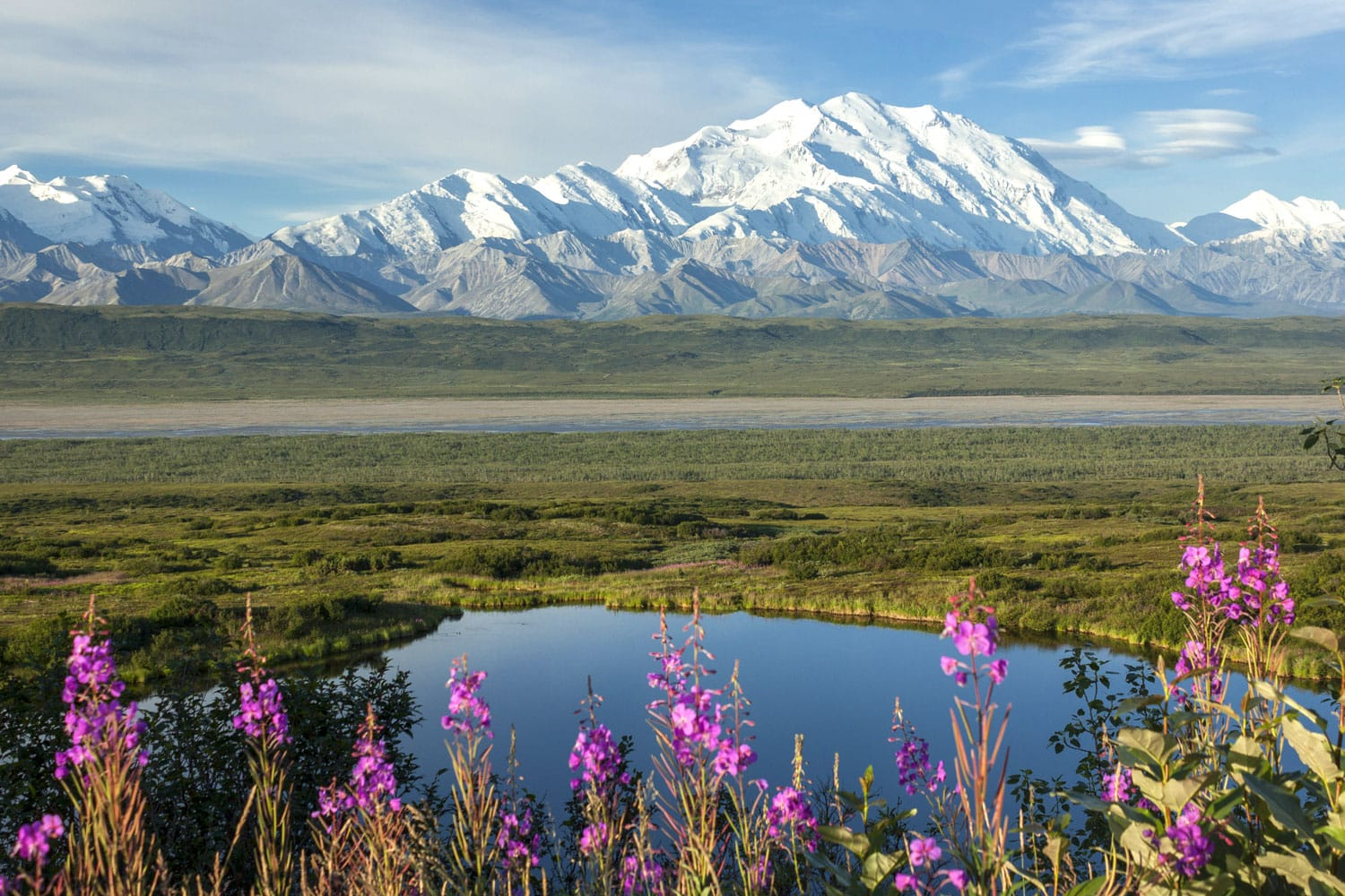 Denali and Fireweed, Denali National Park, Alaska