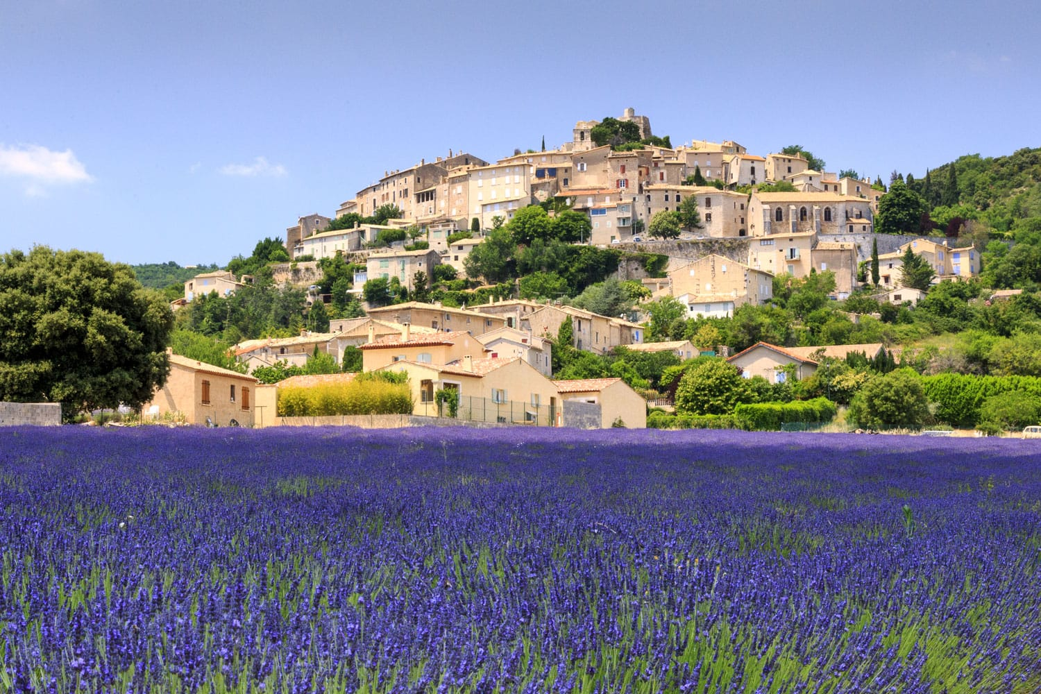 Lavender field and Simiane la rotonde village in Provence France