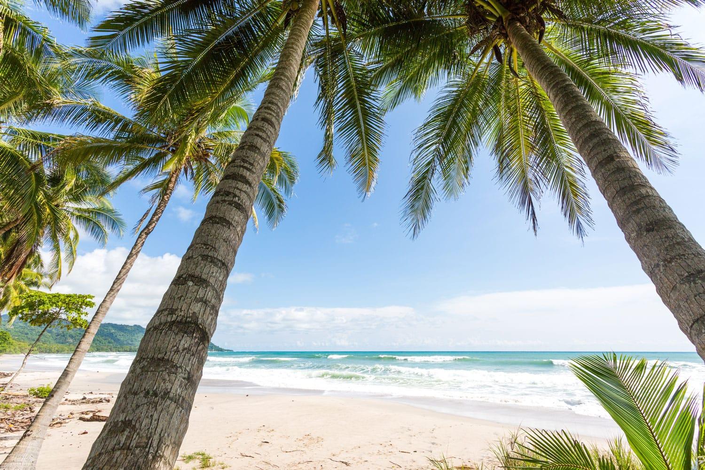 Costa Rica, Playa Santa Teresa, sunset on the beach, surfers