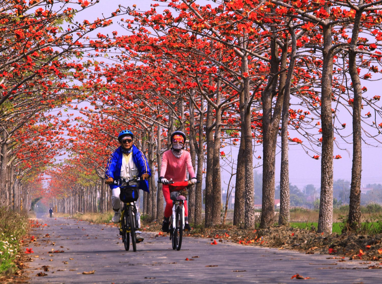 Cycling on the Baihe Cotton Tree Path in Taiwan