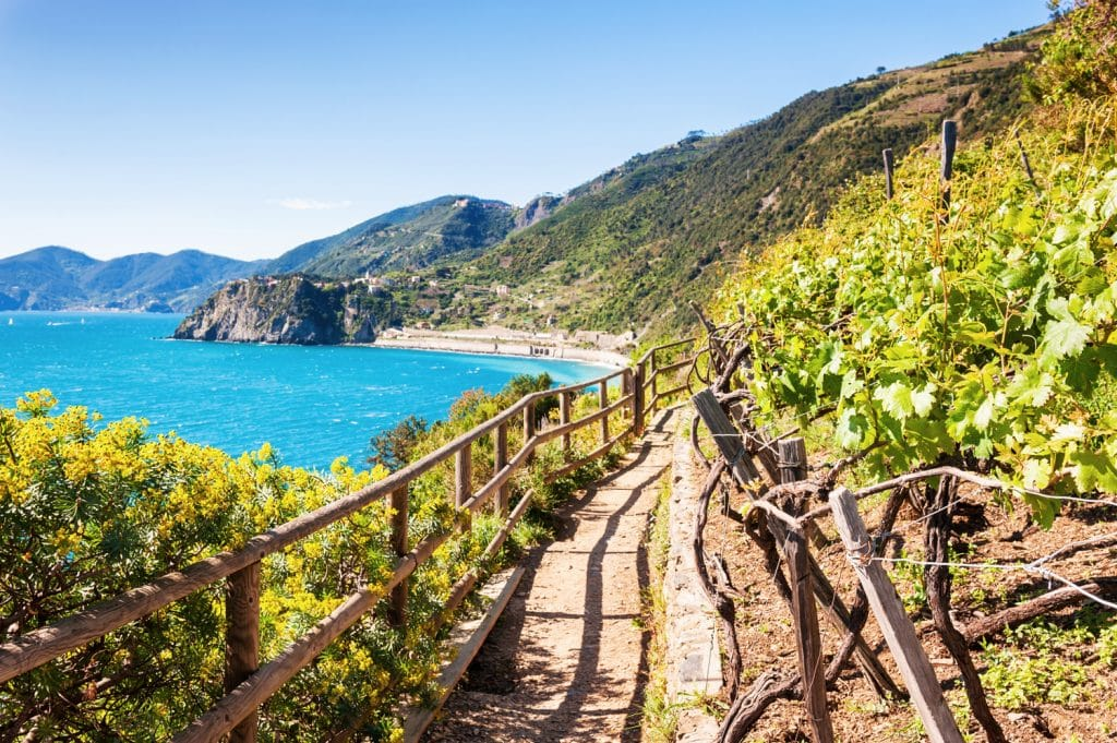 Beautiful view of the vineyards, sea and mountains. Cinque Terre, Italy.