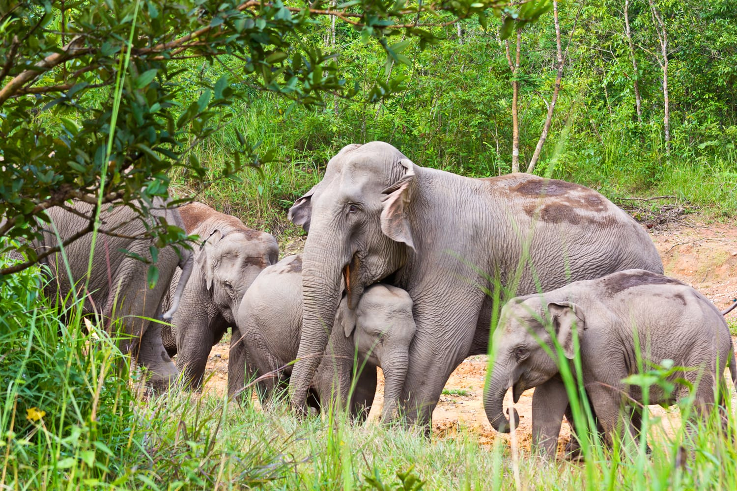 Elephants at Kui Buri National Park in Thailand