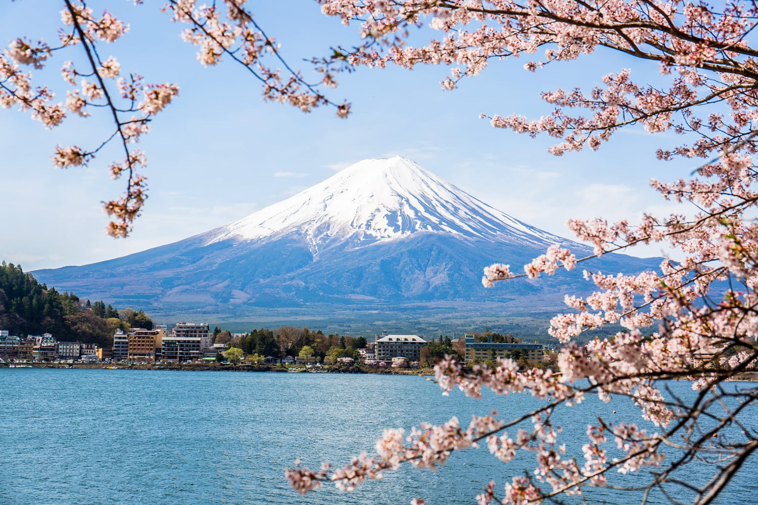Mount Fuji with cherry blossom at Lake kawaguchiko in japan