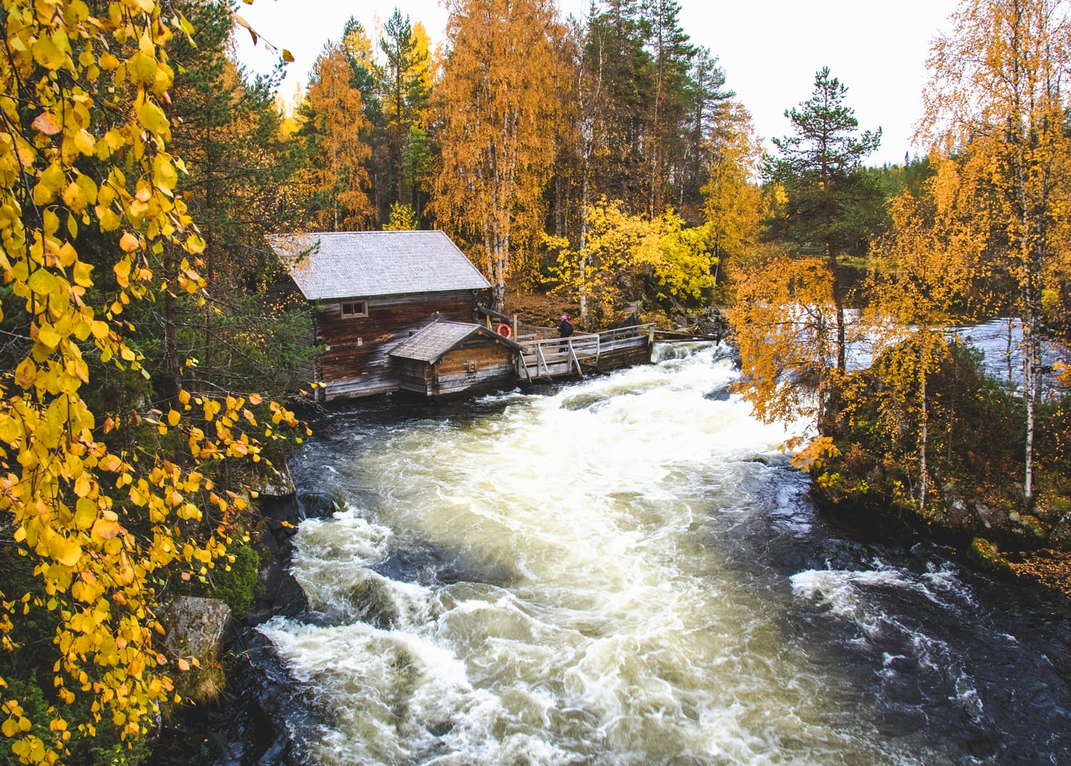 A public rest cabin in Karhunkierros trail during yellow autumn leaves in Oulanka National Park. Lapland, Finland.