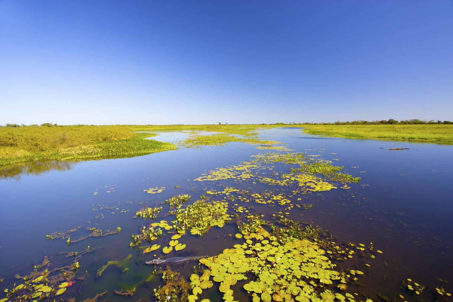 Wetland at pantanal Matogrossense National Park in Brazil