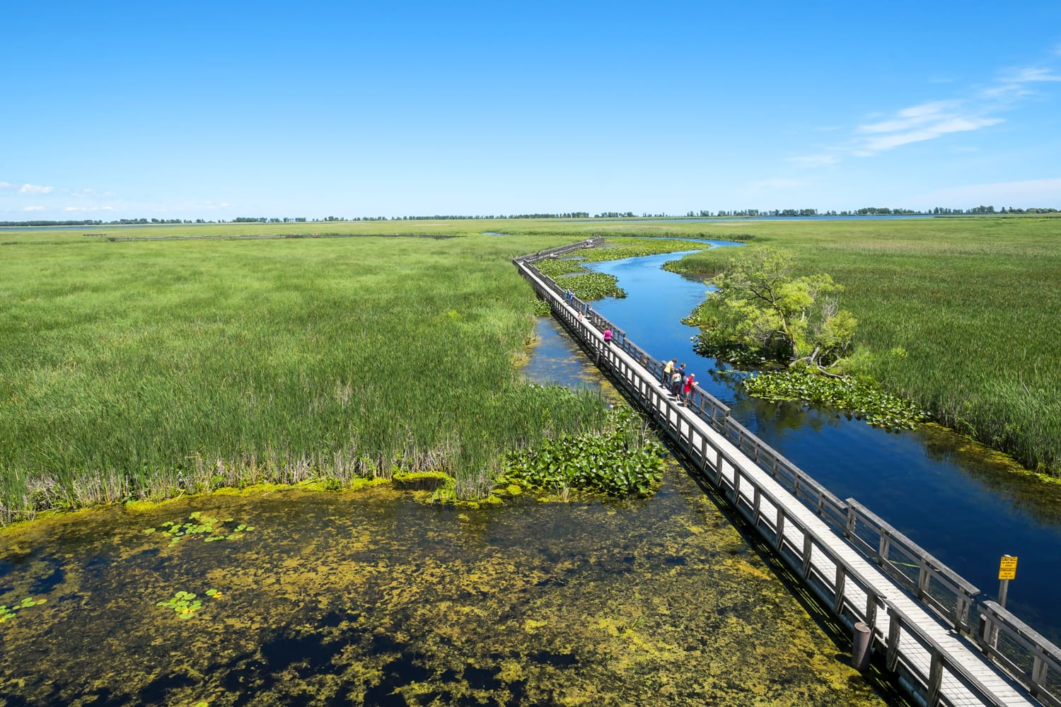 Point Pelee National Park Marsh Boardwalk in Canada