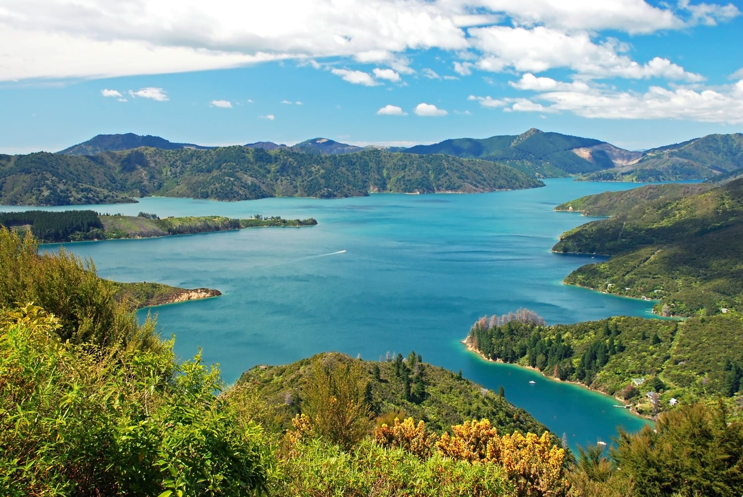 Queen Charlotte Track in New Zealand