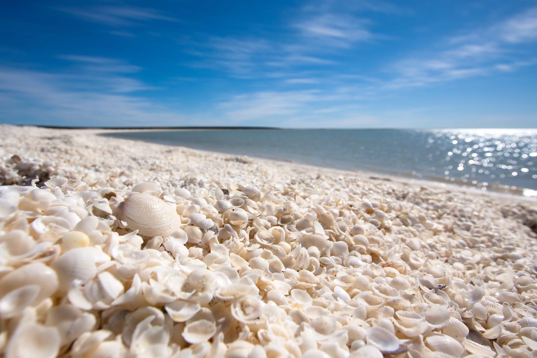 Shark Bay - Shell Beach, Western Australia.