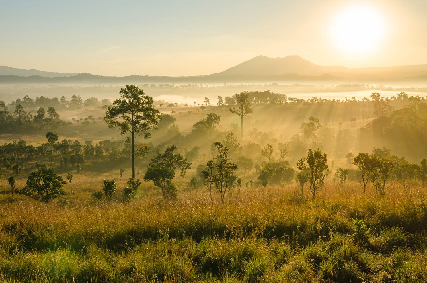 "Beautiful sunrise at national park called ""Thung Salaeng Luang"" Beautiful forest landscape of foggy sunrise in Thung salaeng Luang National Park (Nong Mae na), Thailand. beautiful misty morning."