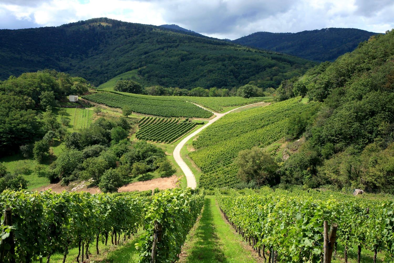 Route des vines in Alsace France
