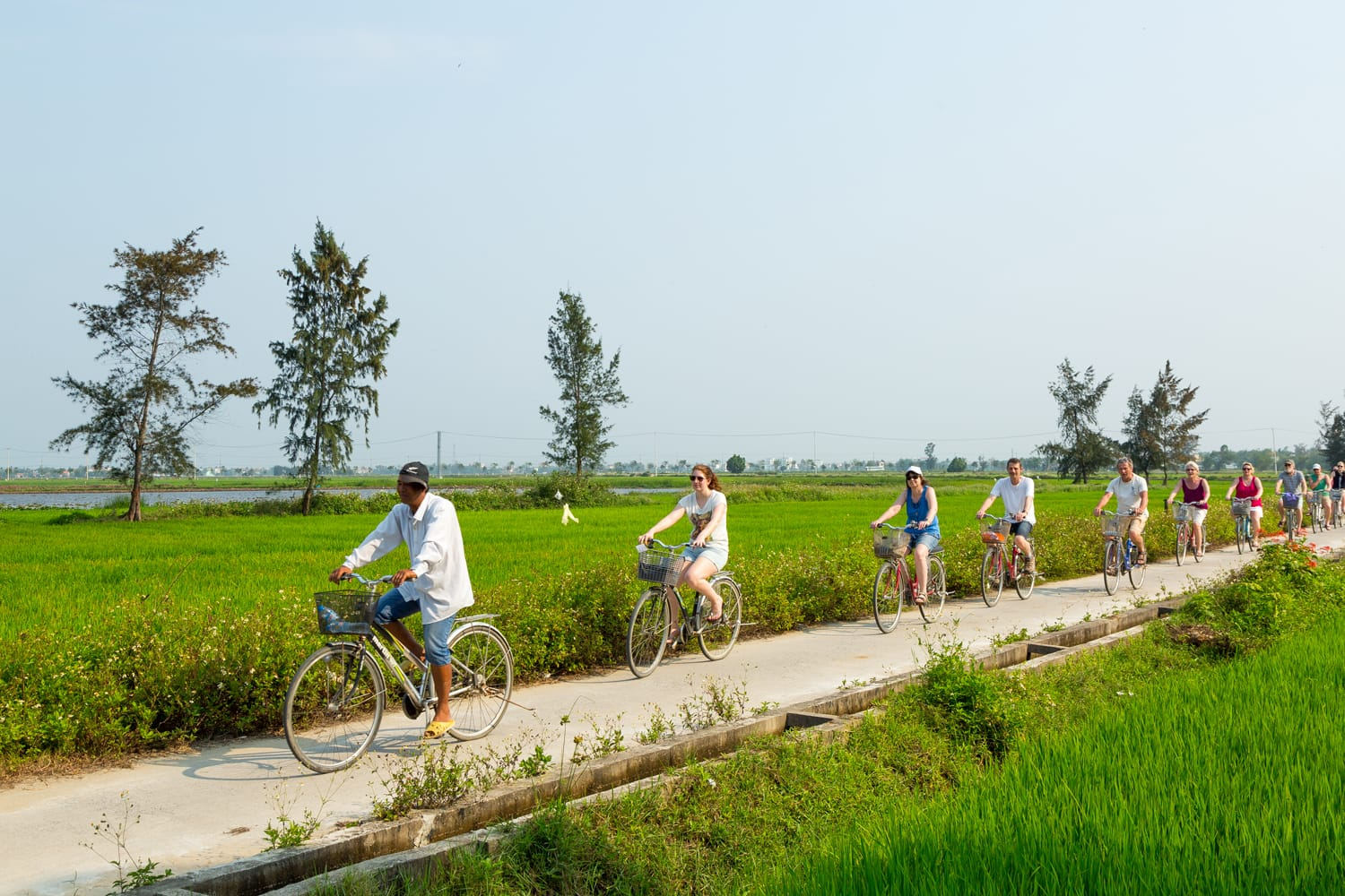 Tourists ride bicycles through rice paddies behind their guide in Hoi An, Vietnan