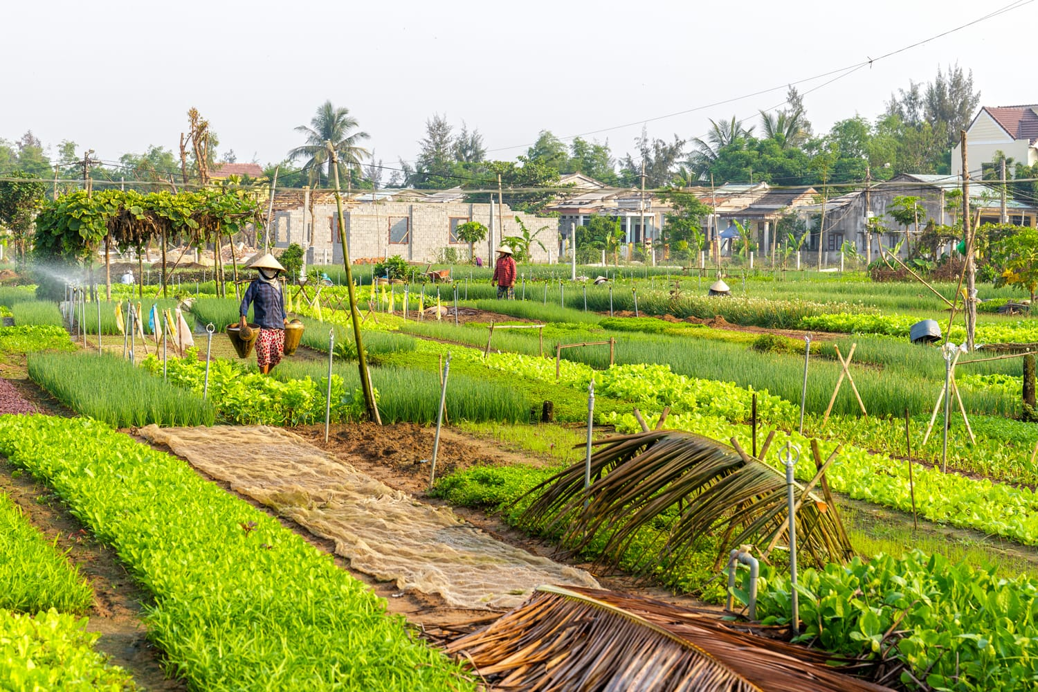 Farmers work at Vegetable Village in Hoi An, Vietnam