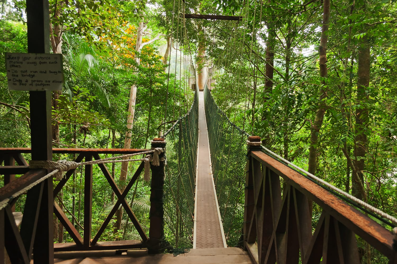 Canopy walkway at Taman Negara National Park in Penang, Malaysia