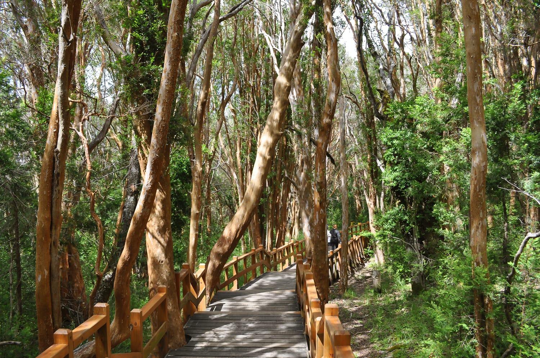 Los Arrayanes National Park in Argentina.