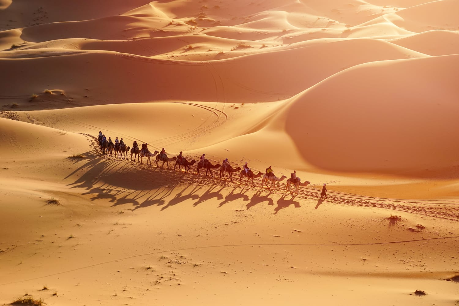 Camel Trek in Dubai, UAE