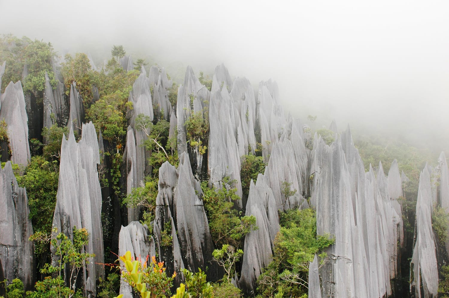 Pinnacles in Gunung Mulu National Park. Borneo. Malaysia.
