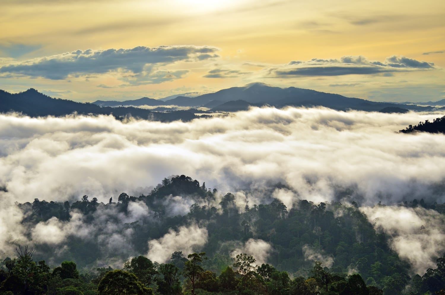 Sunrise with fogs and mist over rain forest in Danum Valley Conservation Area in Lahad Datu, Sabah Borneo, Malaysia.
