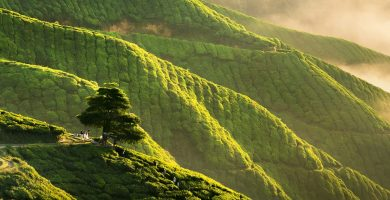 Panorama early morning sunrise over hilly tea plantation in Cameron Highlands, Pahang, Malaysia.