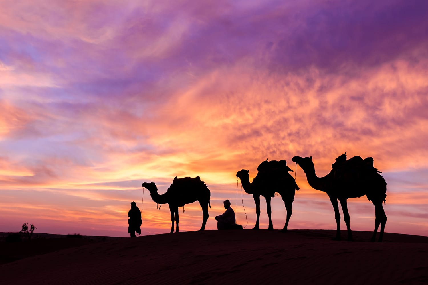 man with camel in desert during sunset