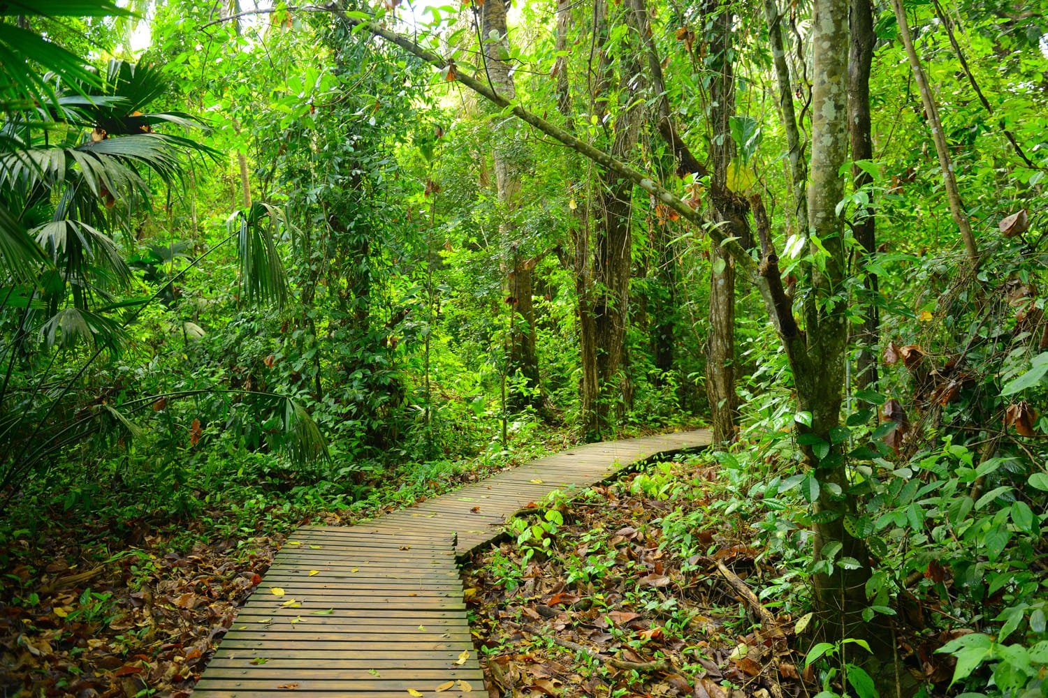 The walking path through the jungle in Tayrona National Park, Colombia