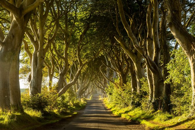 A road runs through the Dark Hedges tree tunnel at sunrise in Northern Ireland, UK