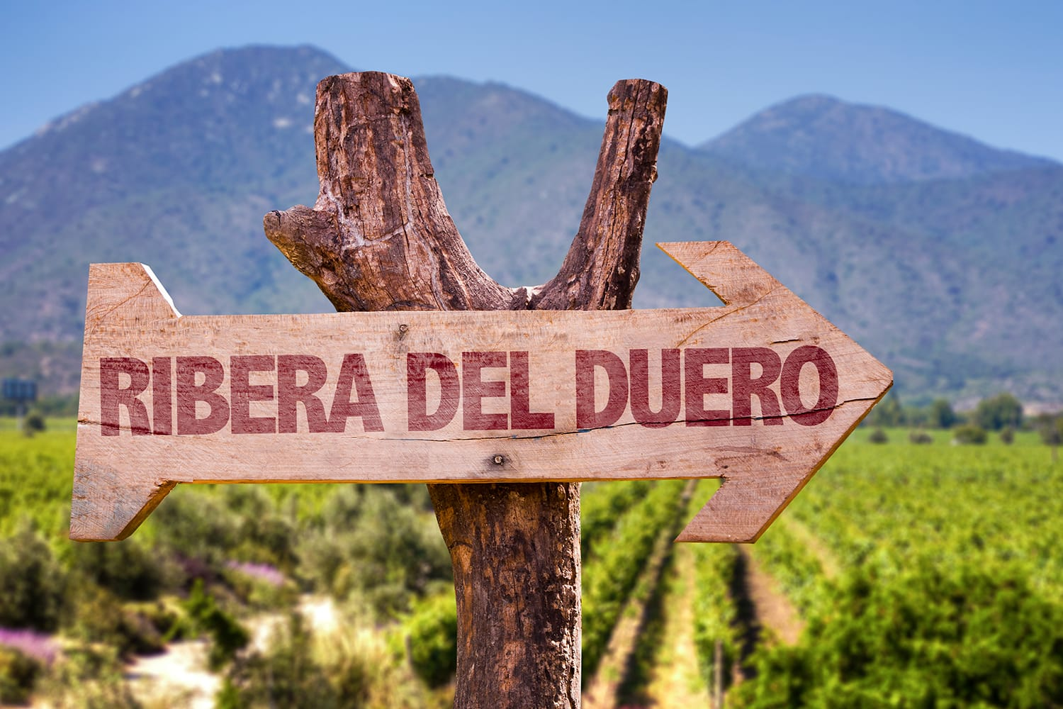 Ribera Del Duero wooden sign with vineyard background, Spain