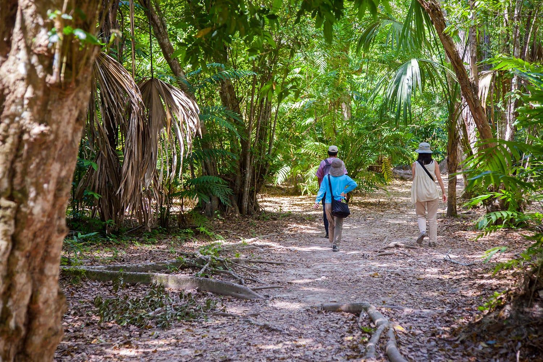 Tourist walking in Tikal, Guatemala