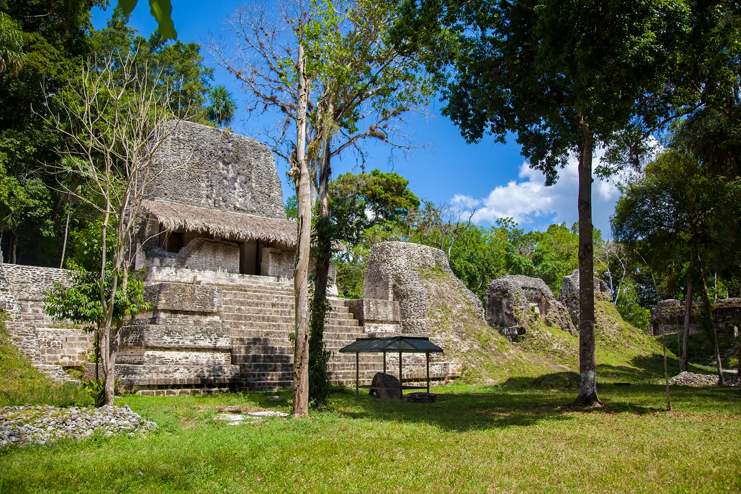 Structure 5D-96, the largest of the temples on the Plaza of The Seven temples, Tikal Peten, Guatemala