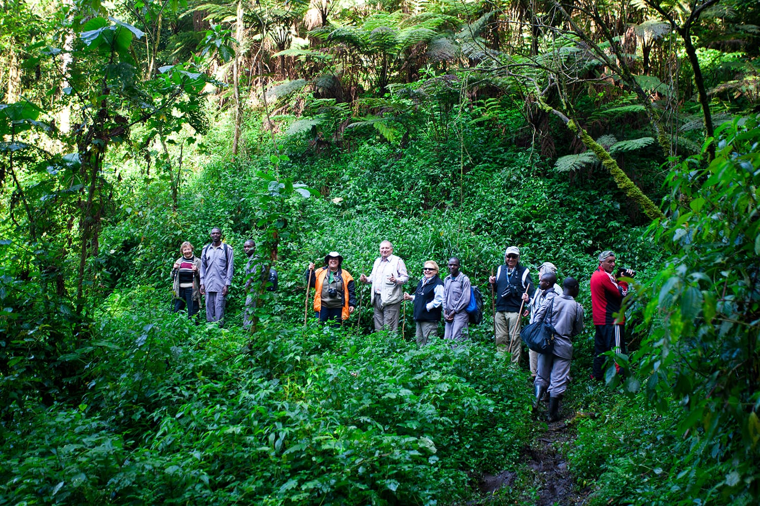 Unidentified tourists on gorilla trekking in the African rainforest in Bwindi Impenetrable Forest National Park, at the borders of Uganda, Congo and Rwanda.