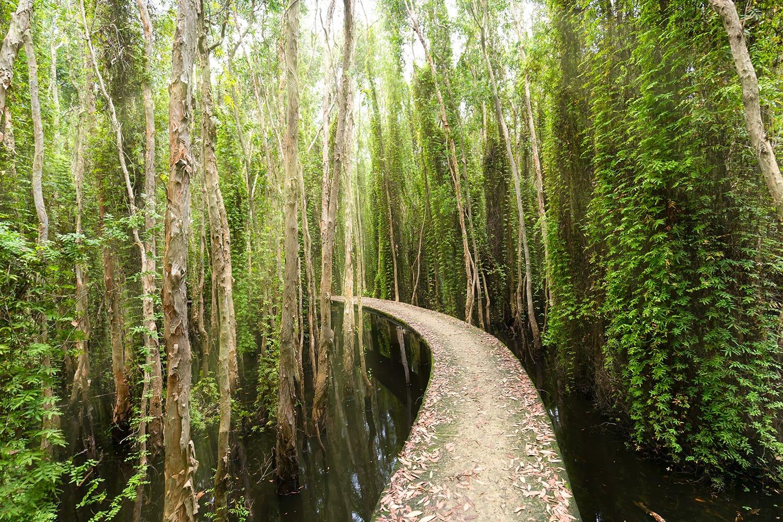 Melaleuca forests in Tan Lap Floating Village, Vietnam