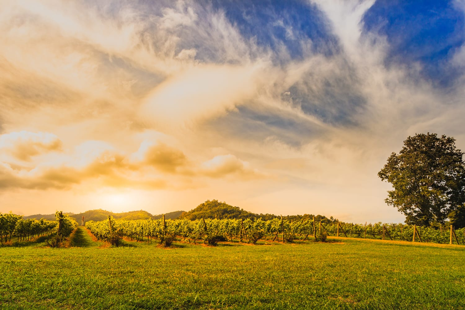 Sunset over Khao Yai Vineyards in Thailand