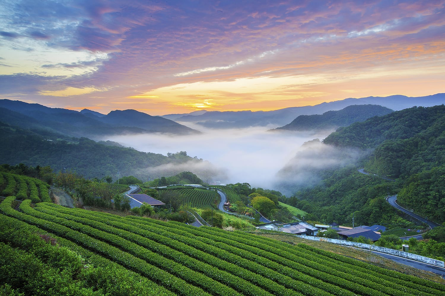 Pinglin tea plantation, Taiwan