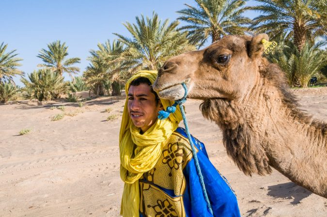 Man next to his camel, in a palm grove near the desert of Erg Chebbi, Morocco