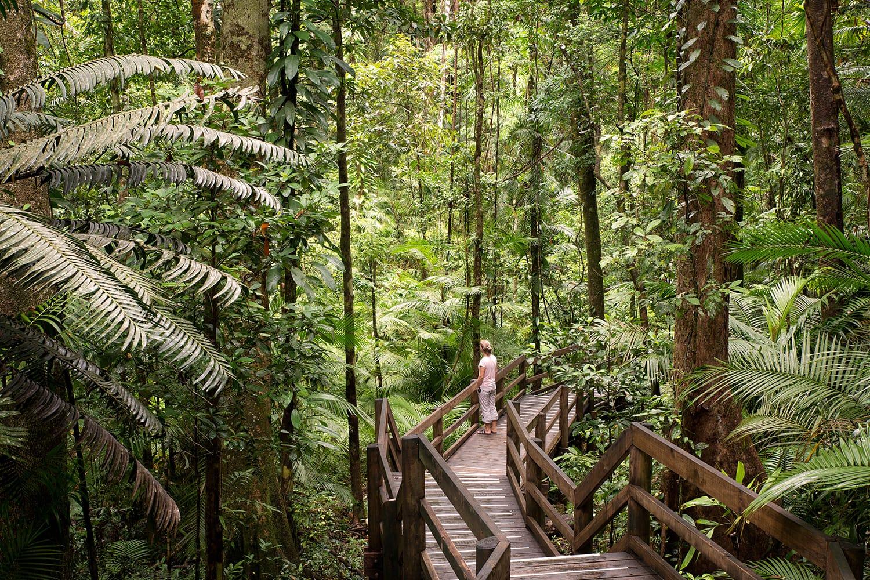 Boardwalk in Daintree National Park, Australia