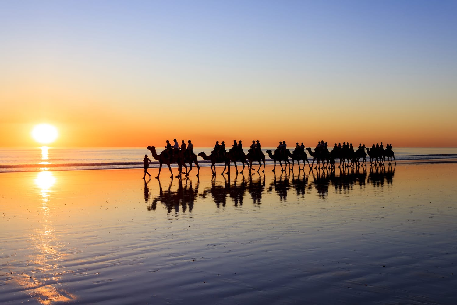 Camels on beach at sunset, Broome, Western Australia