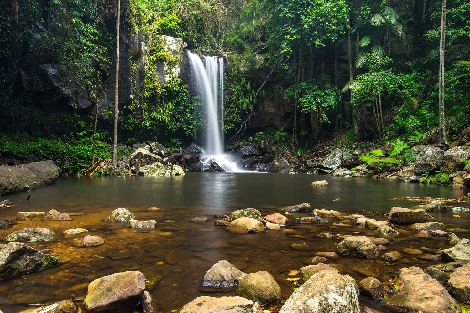 Curtis Falls a popular waterfall in the Tamborine National Park in the Gold Coast Hinterland