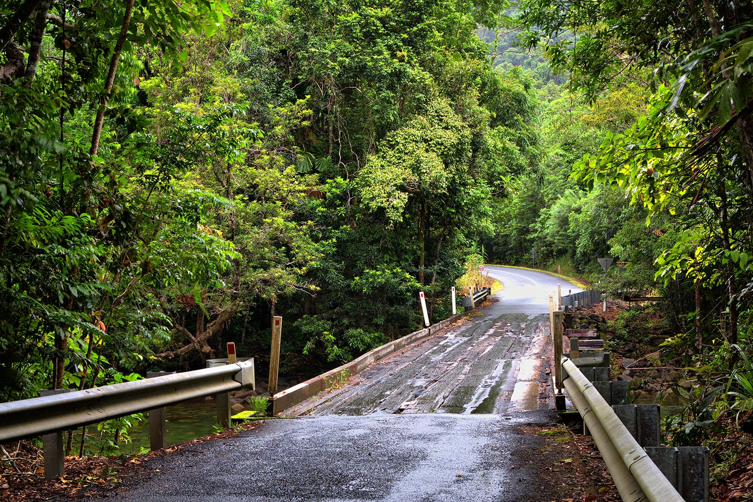 Road at Daintree National Park, Queensland, Australia