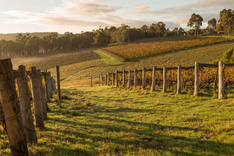 Vineyards in Westerns Australia