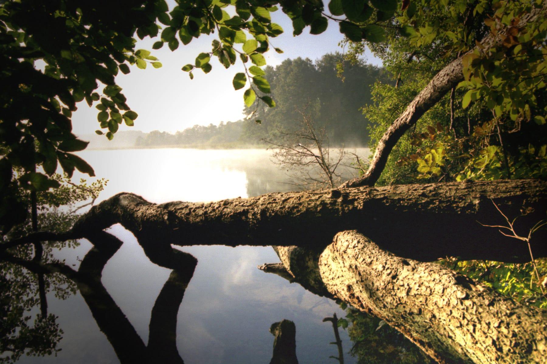 Schaalsee in Germany