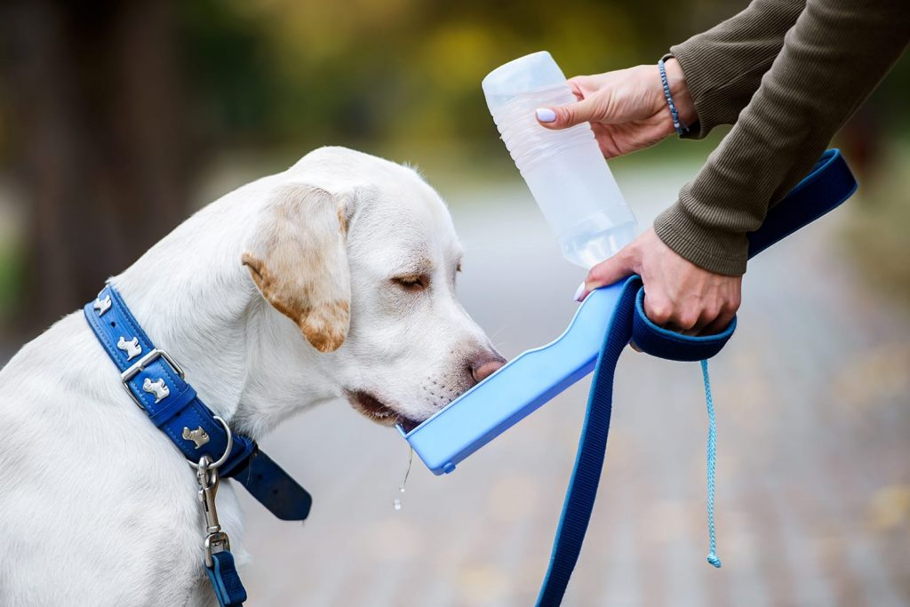 Dog drinking water from portable dog water bottle