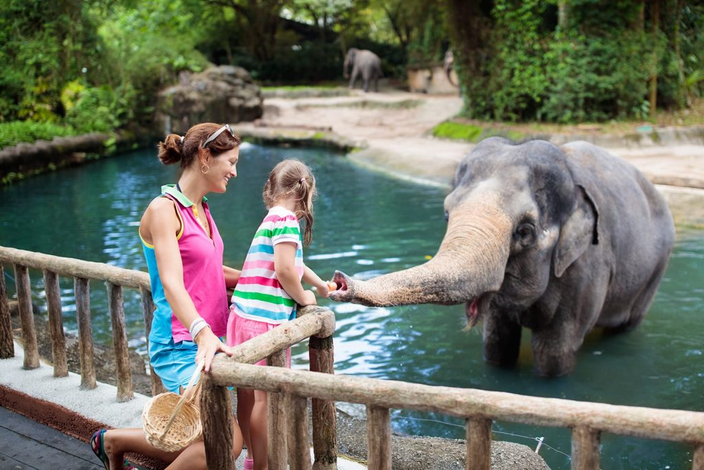 San Diego Zoo Christmas 2021 15 Best Zoos In The World To Visit In 2021 Road Affair
