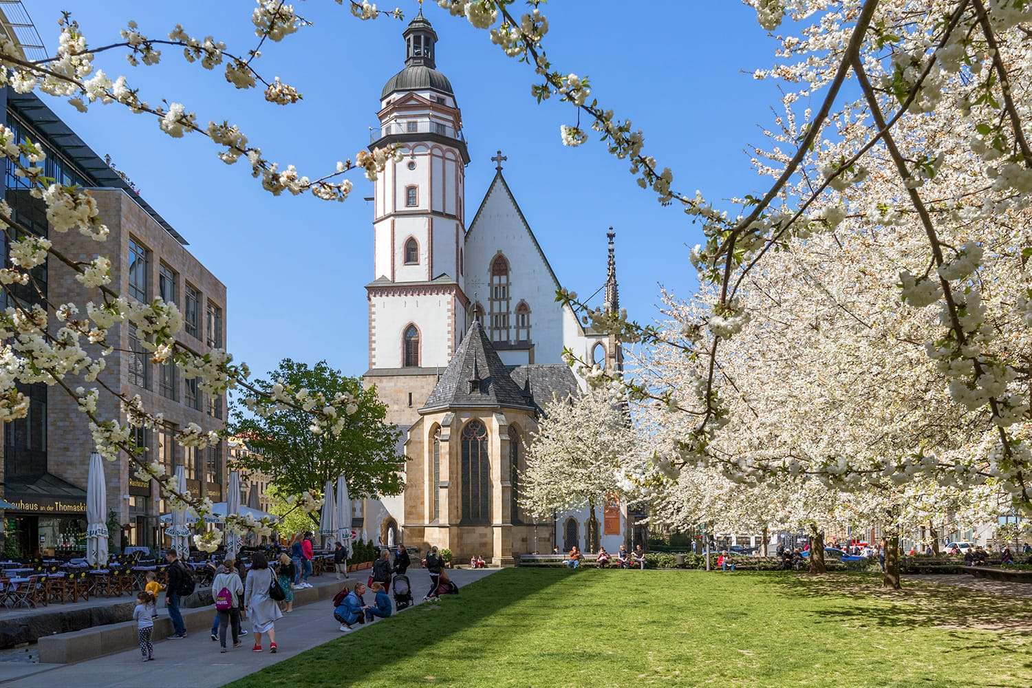 Flowering trees in front of the St. Thomas Church in Leipzig, Germany