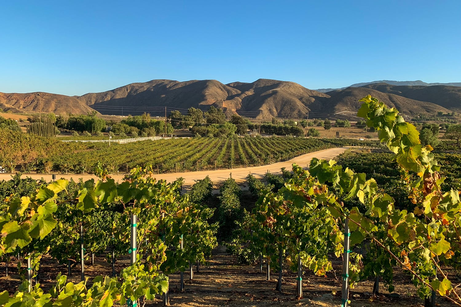 Vineyards at the wine region in Temecula, Southern California, USA