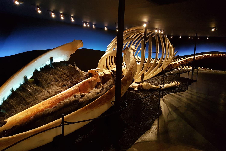 Húsavík Whale Museum in Iceland
